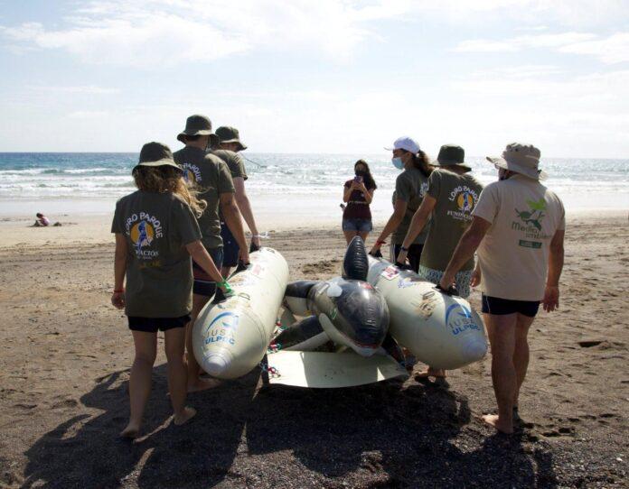 Foto de Voluntarios realizan un simulacro de varamiento masivo de